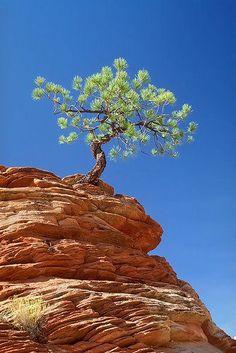 treeonrock